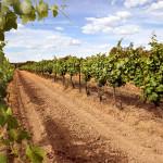 Top 10 Huner Valley Wineries