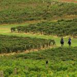Hunter Valley best wine region in Australia