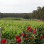 Hunter Valley Unique Wine